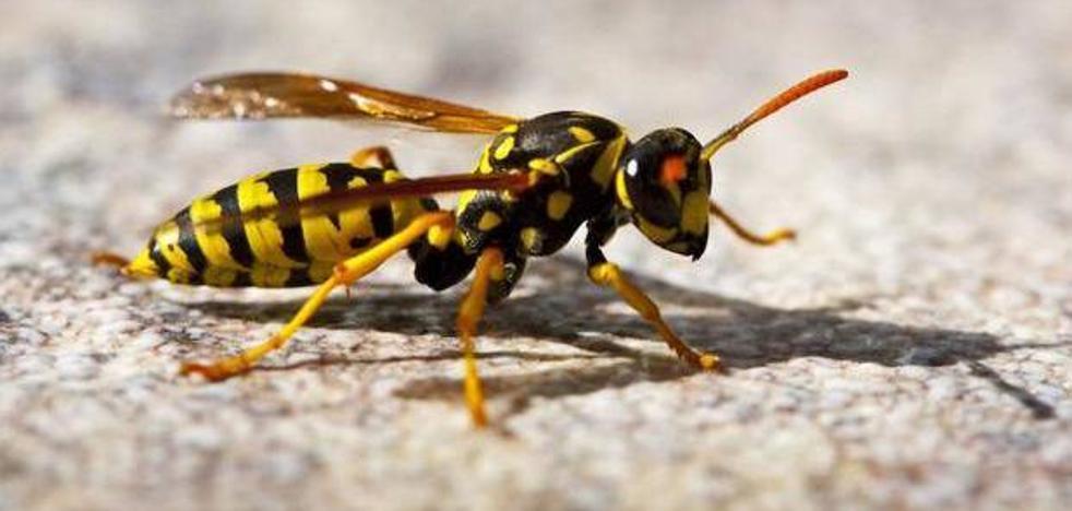 Qué hacer y qué no cuando veas avispas y abejas (y si te pican)