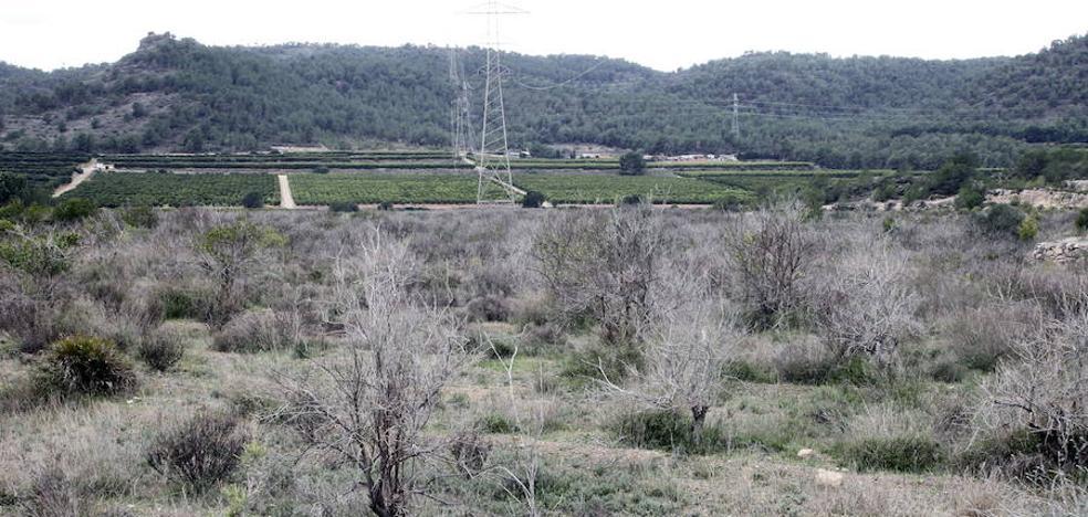 La Generalitat estima que Riba-roja no debe pagar 25 millones al Valencia CF por Porxinos