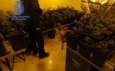 Desmantelan tres puntos negros de venta de cocaína y marihuana en Algemesí con 12 detenidos