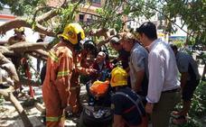 Cae un árbol sobre un grupo de jubilados en Almussafes