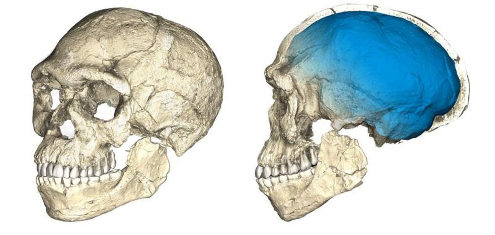 El homo sapiens envejece unos 100.000 años