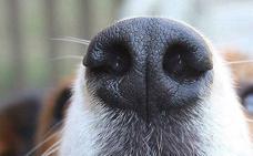 ¿Pueden los perros oler el miedo?