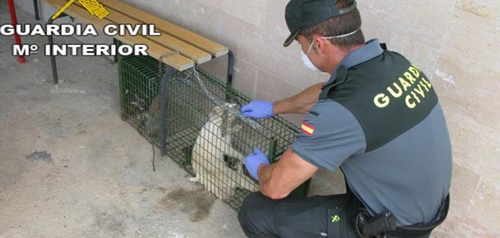 Tres detenidos por maltratar a animales en la provincia de Valencia