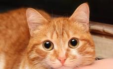 Todo lo que tu gato quiere decirte