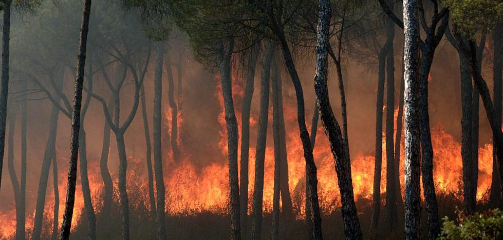 La mano del hombre «está detrás» del incendio de Huelva