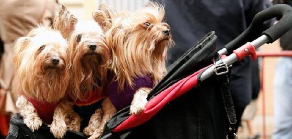 ¿Puedo viajar con animales de compañía en Renfe?