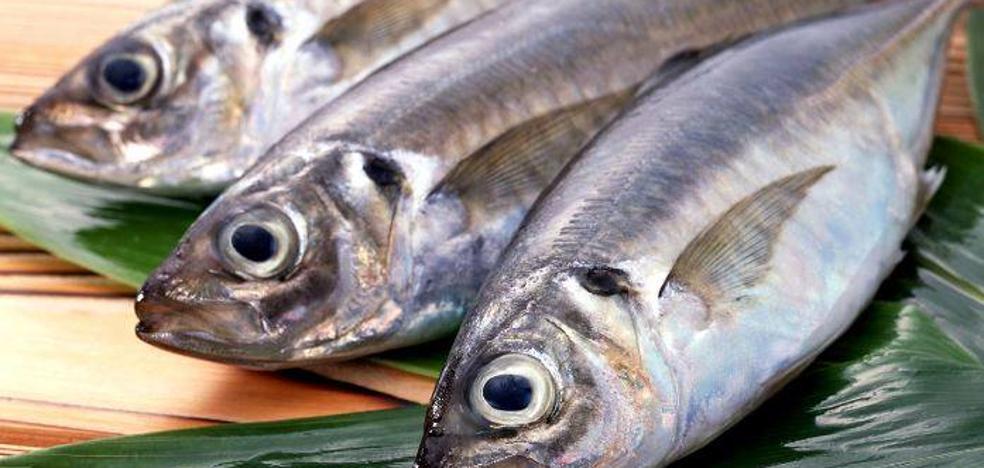 La ciguatera, la nueva toxina que amenaza al pescado europeo