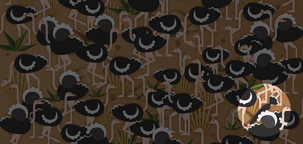 Solución | Hay un paraguas perdido entre los avestruces
