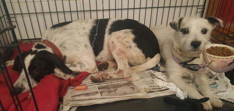 Los perros del matrimonio de Paterna asesinado por su hijo, en estado de shock