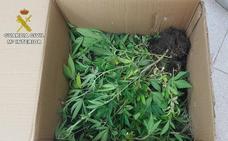 Detenidos cuatro ladrones y el propietario de una casa en la que le robaron cajas de marihuana