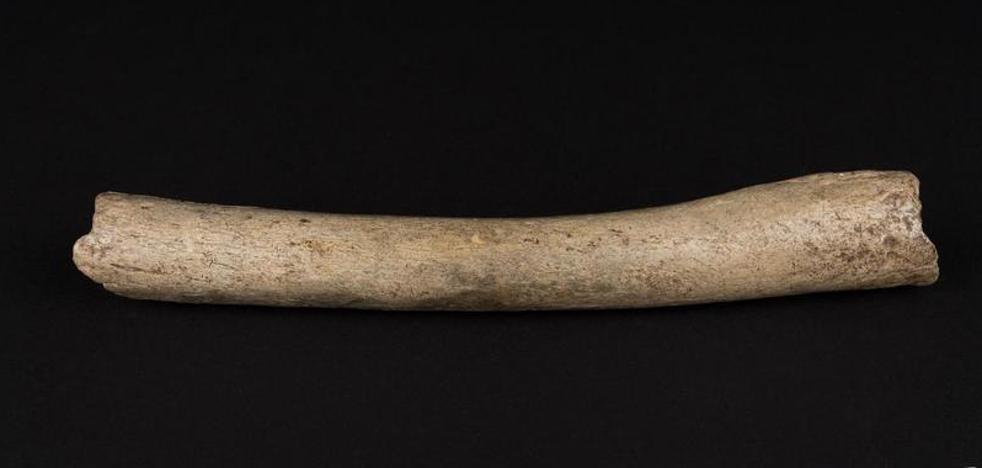 El ADN mitocondrial aclara la relación de neandertales y humanos modernos