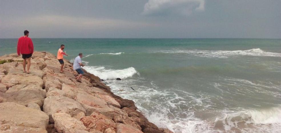 Un tiburón de casi dos metros provoca la alarma en la playa de Tavernes de la Valldigna