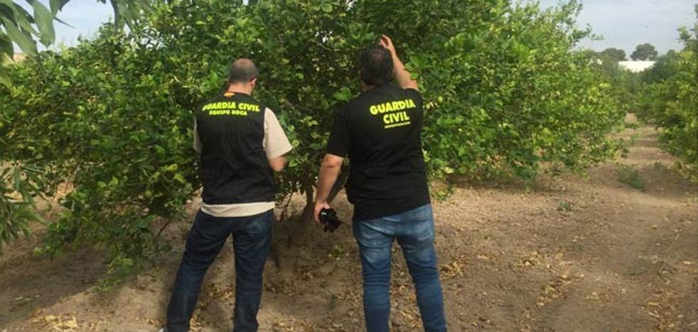 La Guardia Civil detiene a tres personas por el robo de 3.000 kilos de limones