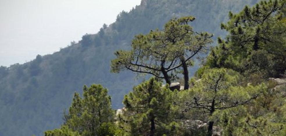 El Consell estudia implantar el 'céntimo forestal' para mantener los montes