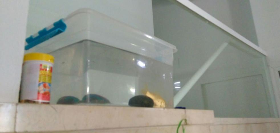 Se va de vacaciones y deja a su pez en el portal para que lo cuiden sus vecinos