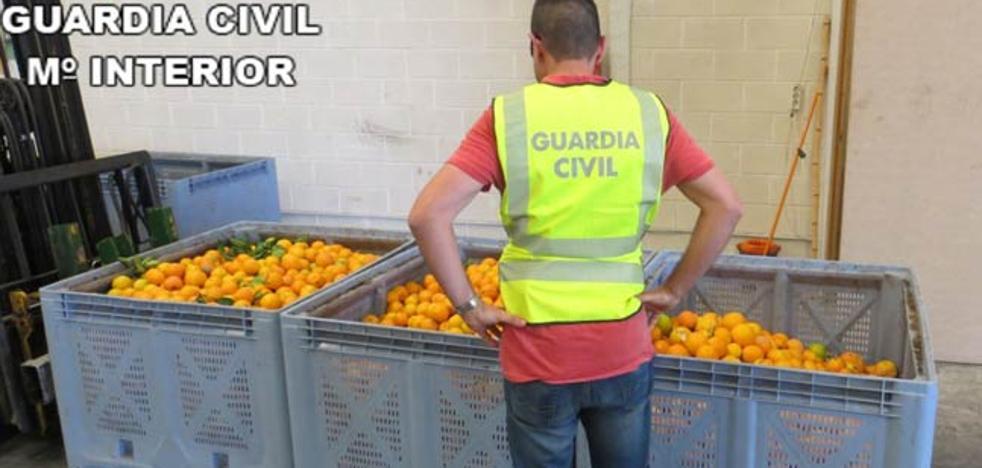 Detenidas cinco personas por robar 33.000 kilos de naranjas