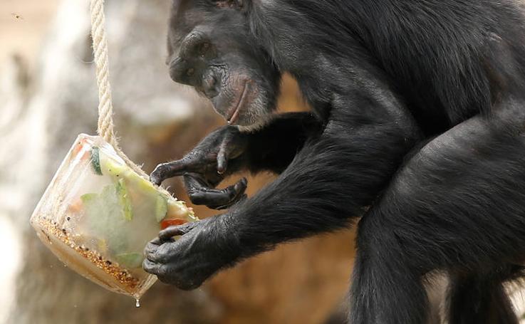 Fotos divertidas de animales en el Bioparc Valencia