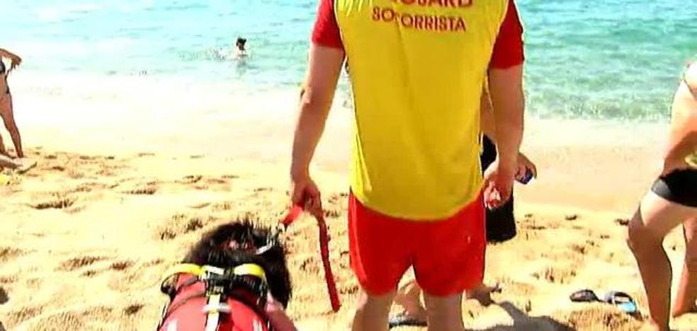 Perros salvavidas en Sant Pol de Mar