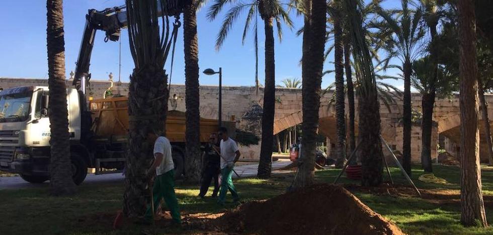 El Ayuntamiento plantará 1.200 árboles por toda Valencia antes de que acabe el año