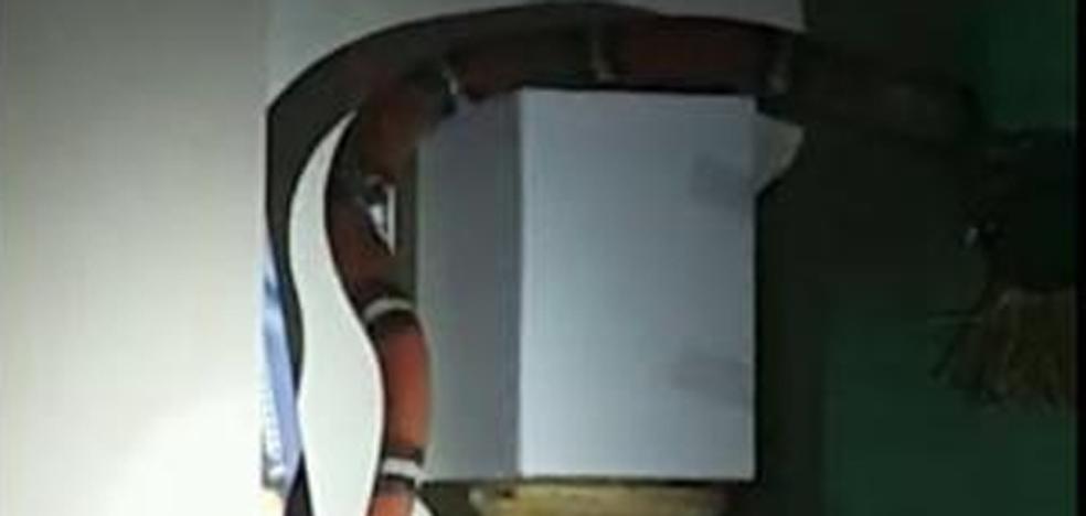 Capturan una serpiente doméstica de más de un metro en una vivienda de Elda