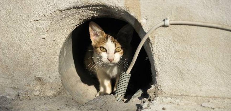 Muere un mujer tras ser contagiada de un raro virus por un gato callejero