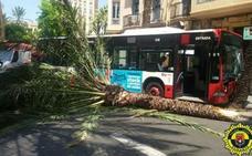 Diez heridos al chocar un autobús de línea contra una palmera en Alicante