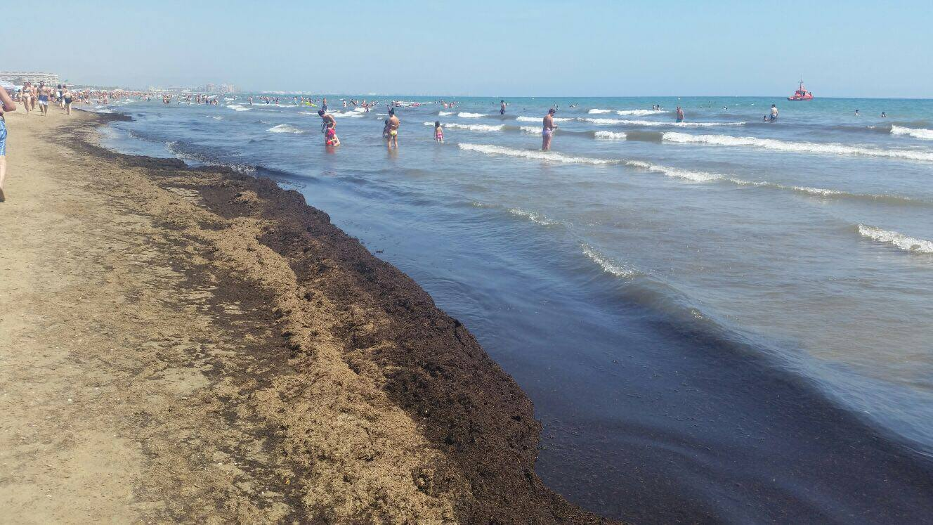 Fotos de algas en la playa del Cabanyal