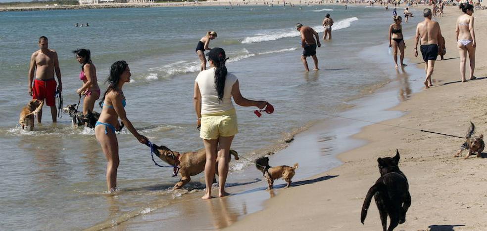 El Ayuntamiento de Valencia estudiará tras el verano ampliar la playa para perros de Pinedo