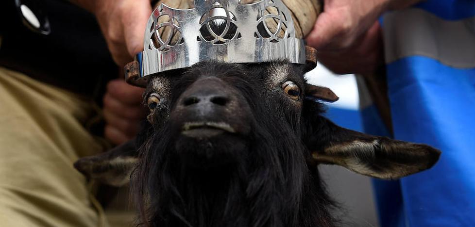 El festival 'Puck Fair', una de las tradiciones más antiguas de Irlanda