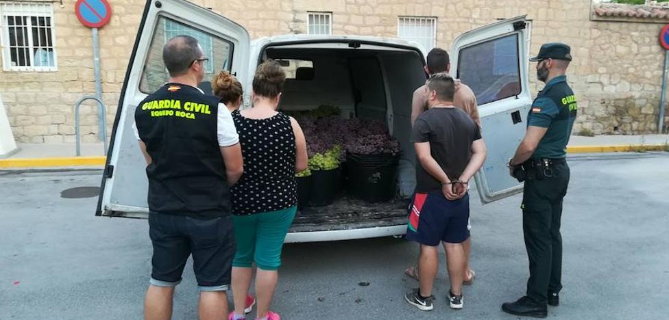 Detenidos por robar más de 4.500 kilos de uva en Monforte del Cid