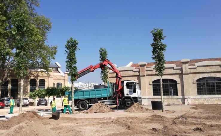 Fotos de los árboles que se anclarán al suelo en el Parque Central