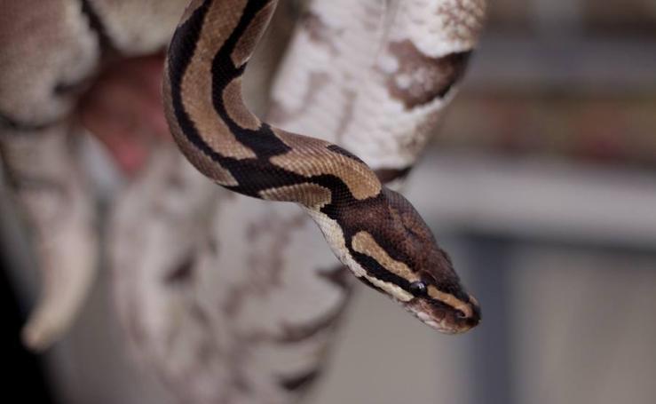 Fotos de Avifauna, espacio de animales exóticos en Valencia