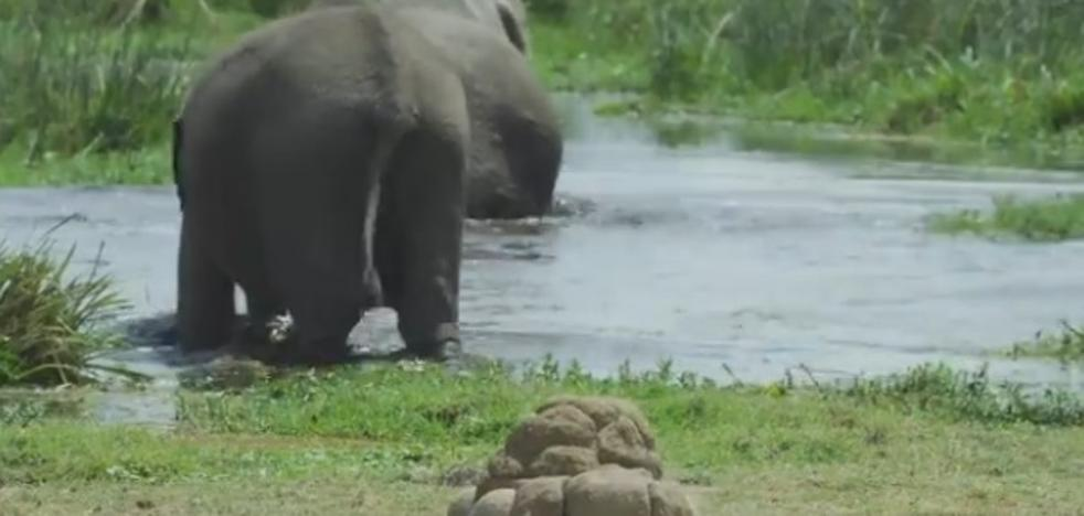 La caca móvil que la BBC utiliza para grabar elefantes