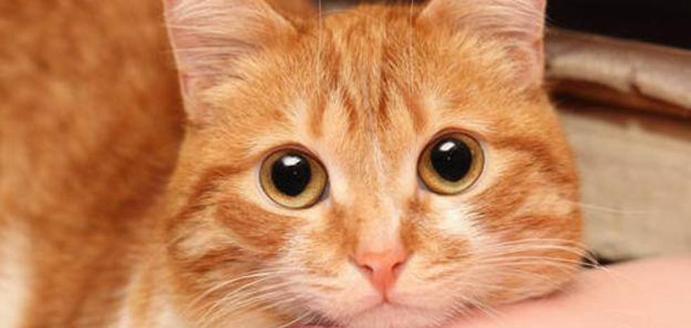 ¿Por qué se ha llenado Twitter de gatos durante el atentado de Barcelona?