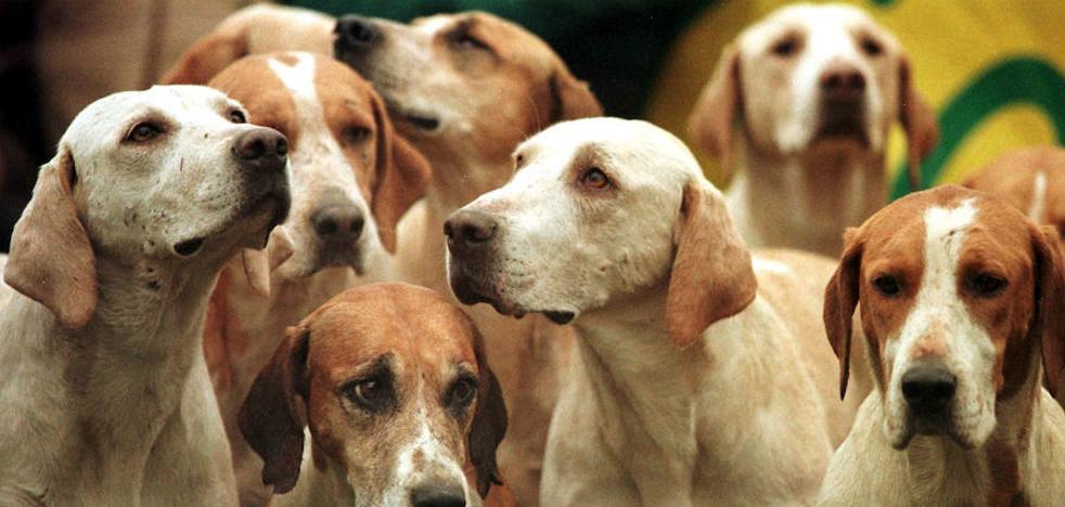 Mueren nueve de los diez perros que un joven cazador dejó encerrados en su coche