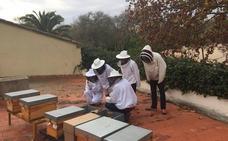 Recuperan 37 enjambres de abejas en cuatro meses en la ciudad de Valencia