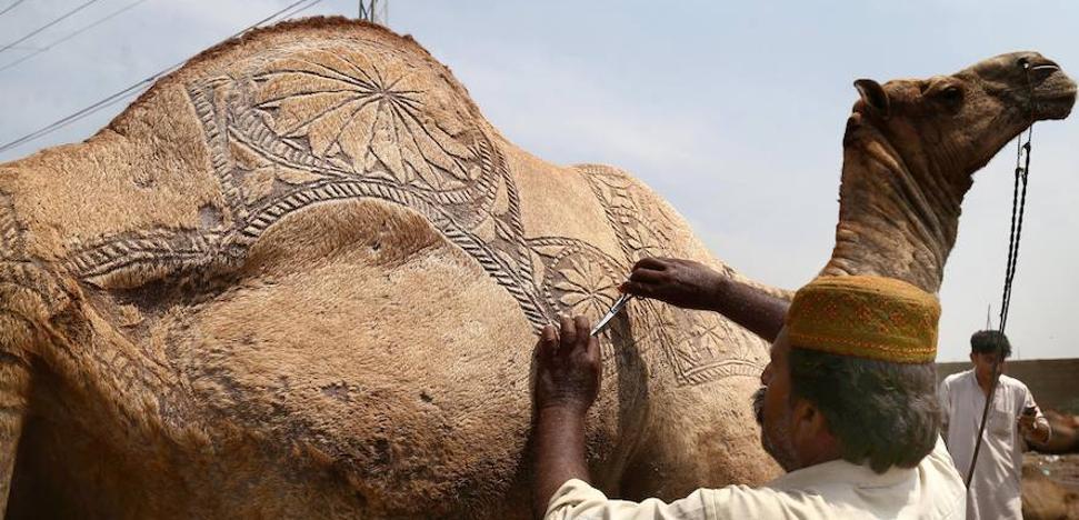¿Qué es el Eid al-Adha y por qué es tan sagrado para los musulmanes?