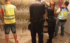 Desmantelada una plantación ilegal de marihuana en Calles con jabalíes y perros