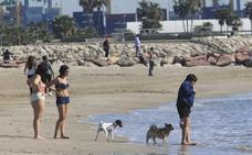 La playa canina de Pinedo cumple un año con un aumento de visitantes
