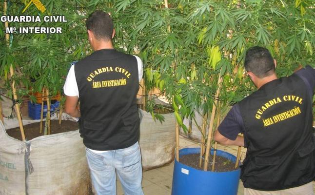 Detenido un hombre por tráfico de 40 kilos de marihuana en Llanera de Ranes