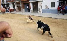 Peñas y ayuntamientos alertan del 'fraude' de ganaderías en los bous al carrer