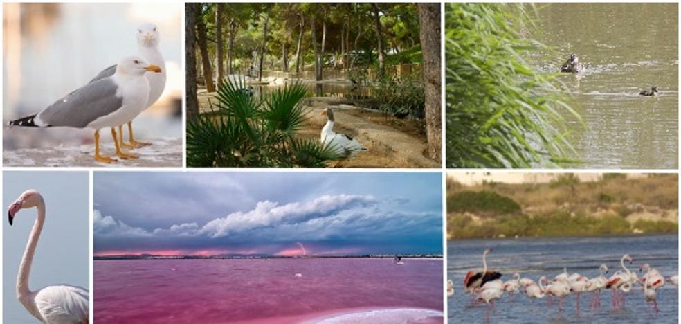 5 lugares de la Comunitat para ver animales salvajes en su hábitat natural
