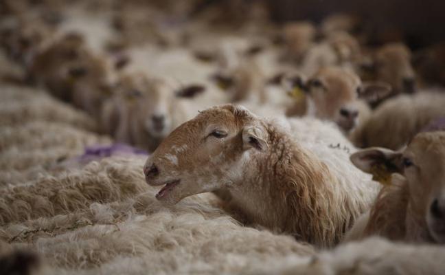 Identifican las raíces neurológicas de la atracción entre animales