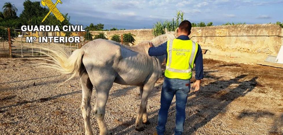 Detenido un hombre acusado de maltratar a un caballo que llevaba más de 10 días sin comida ni agua en Onda
