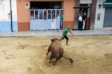 Férreo control a la entrada de reses para atajar el fraude en los bous al carrer