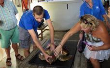 El reencuentro de la tortuga enredada en plásticos con los franceses que la rescataron