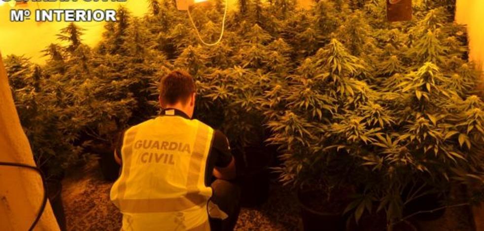 Detienen a dos personas e intervienen 90 plantas de marihuana y armas blancas en Carcaixent