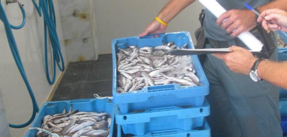 Incautan más de 130 kilos de pescado inmaduro o sin documentación en Callosa de Segura