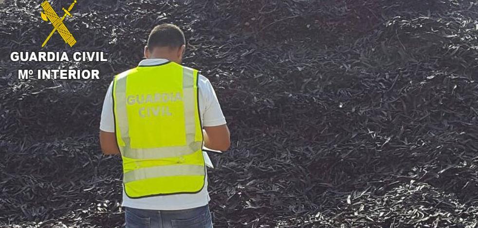 Evitan el «blanqueo» de 5.000 kilos de algarrobas en Camp de Túria