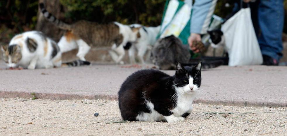 Valencia destina 8.468 euros a adecuar un solar para el bienestar de los gatos